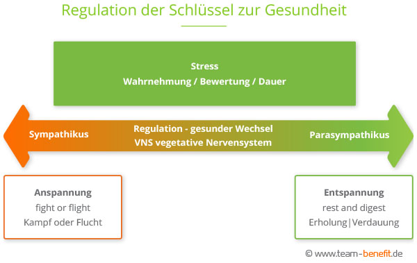 Regulation vegetatives Nervensystem VNS web